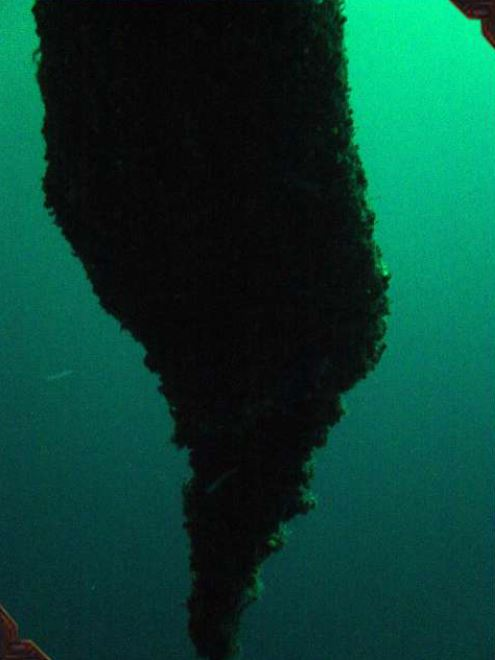 Giant Underwater Stalactite in the Blue Hole